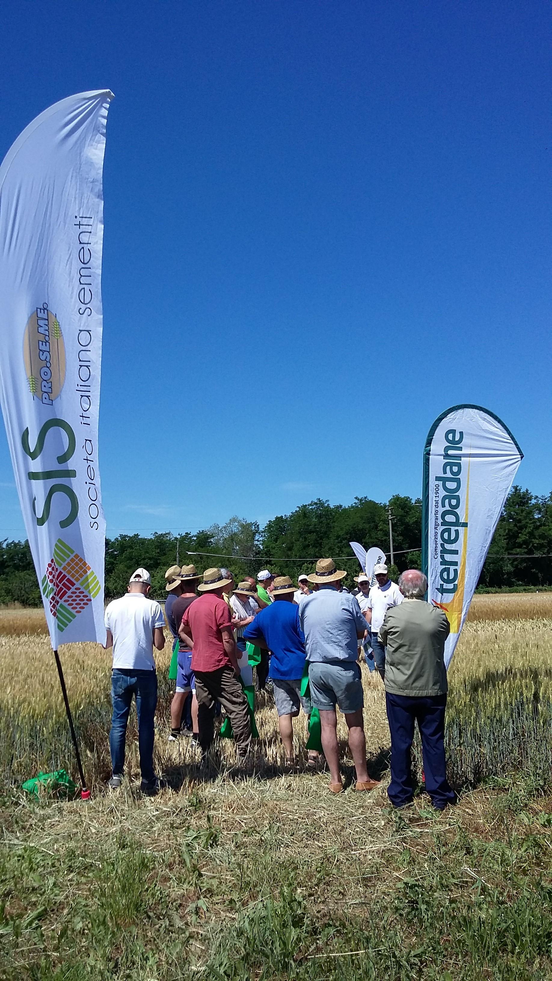 Sementi terrepadane for Consorzio agrario cremona macchine agricole usate